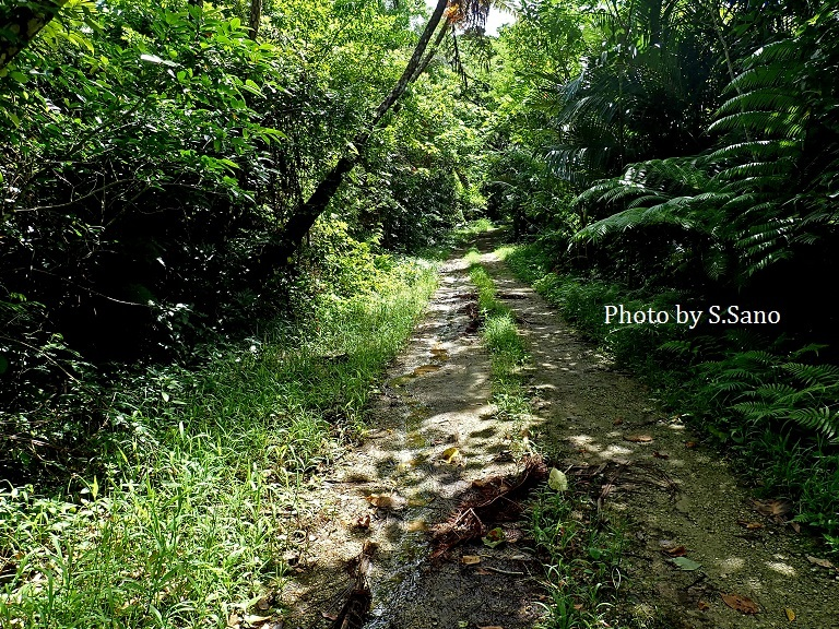 西表島の旅(2018年6月)_b0348205_14313827.jpg