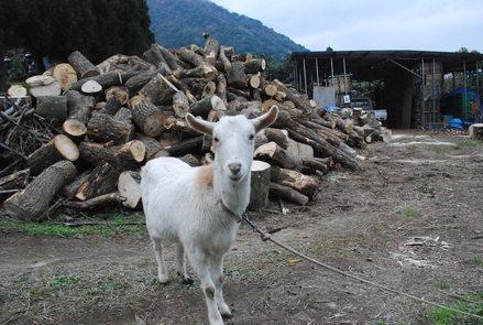 ヤギのララという家族を突然失った悲しみ_d0174710_16415106.jpg