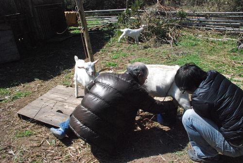 ヤギのララという家族を突然失った悲しみ_d0174710_16421102.jpg