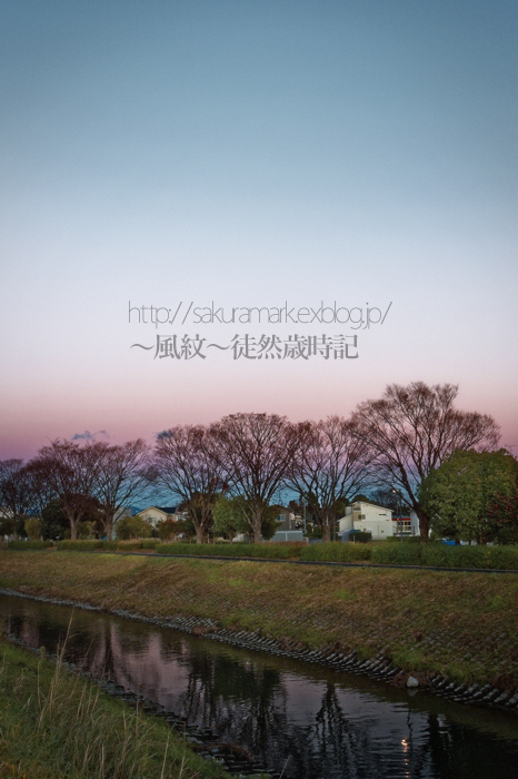 夕闇の中の冬立木。_f0235723_21264579.jpg