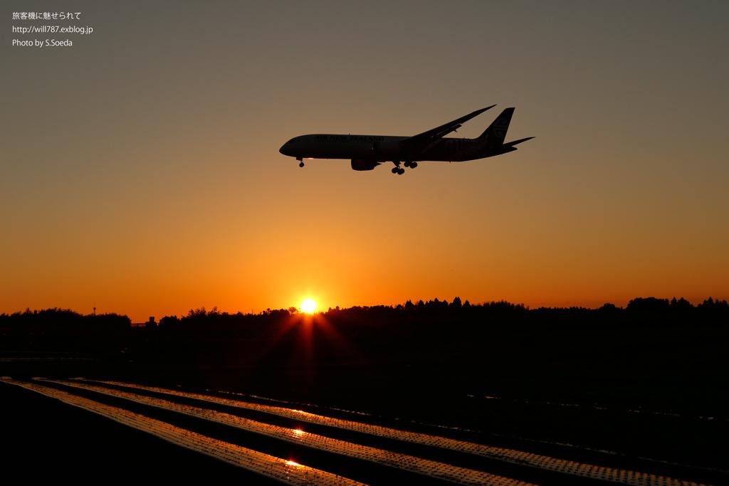 夕陽との絡み 秋の成田空港#5_d0242350_15283366.jpg