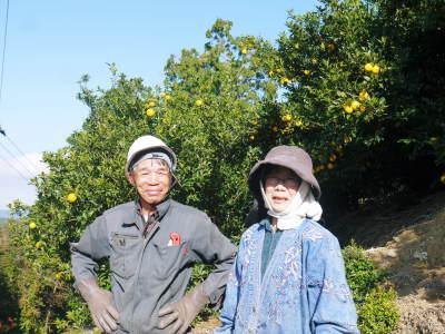 冬至の「柚子風呂」用柚子(ゆず) 平成30年度分、追加受注決定!早い者勝ちです!!_a0254656_16484996.jpg