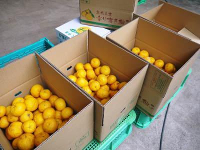 冬至の「柚子風呂」用柚子(ゆず) 平成30年度分、追加受注決定!早い者勝ちです!!_a0254656_16584504.jpg