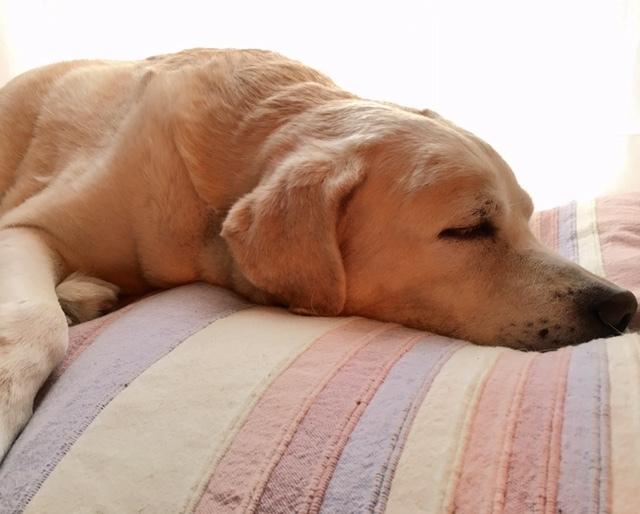 with dog  少し回復_a0165160_20092313.jpg