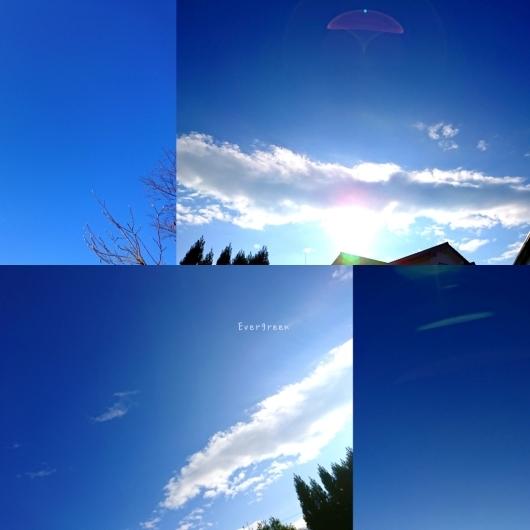 12/17(月)         雨上がりの空と庭。_d0362666_16235006.jpg