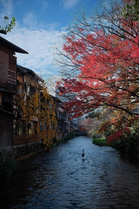 祇園白川 紅葉2018_f0021869_23535969.jpg