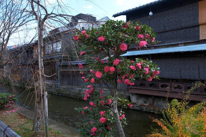 祇園白川 紅葉2018_f0021869_23540281.jpg