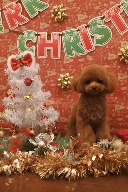 ☆もうすぐクリスマス☆_f0150073_18103197.jpg
