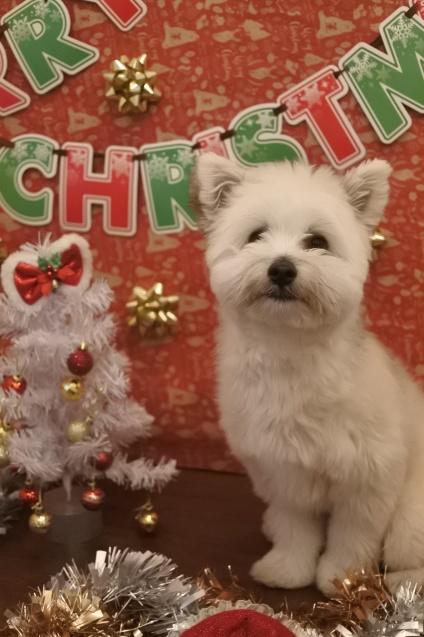 ☆もうすぐクリスマス☆_f0150073_18110008.jpg