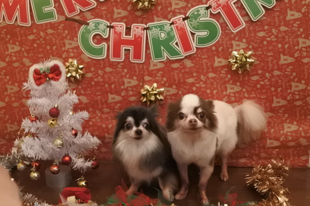 ☆もうすぐクリスマス☆_f0150073_18112127.jpg