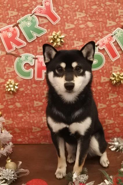 ☆もうすぐクリスマス☆_f0150073_18123196.jpg
