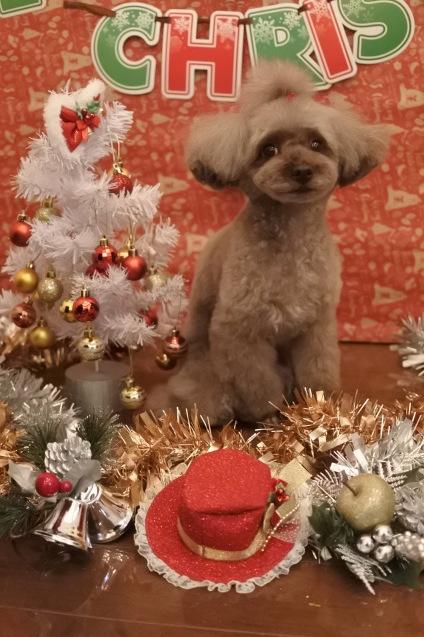 ☆もうすぐクリスマス☆_f0150073_18124776.jpg