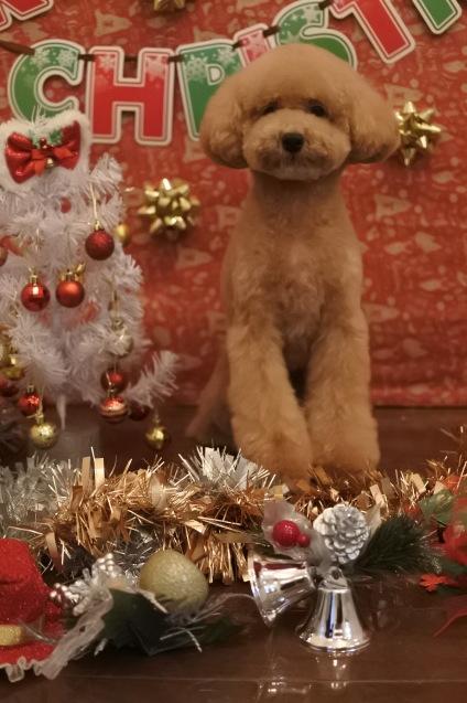 ☆もうすぐクリスマス☆_f0150073_18125865.jpg