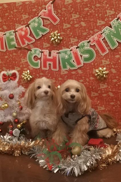 ☆もうすぐクリスマス☆_f0150073_18274561.jpg