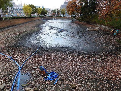 池の水をぜんぶ抜く大作戦??? at 丸亀城_e0146484_16044395.jpg