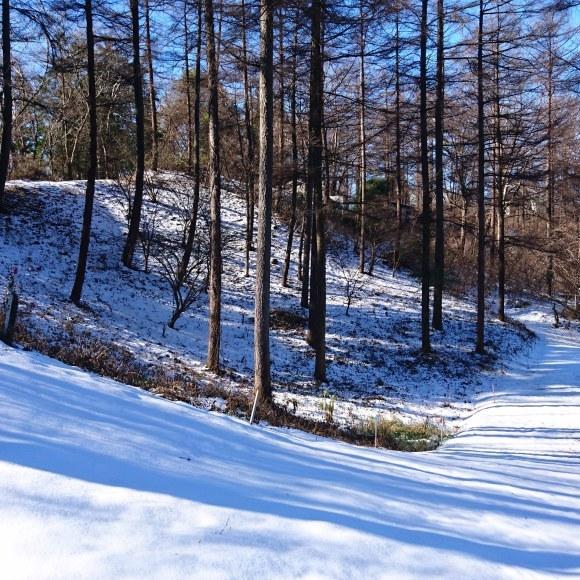 もう雪が・・_c0066693_18413556.jpg