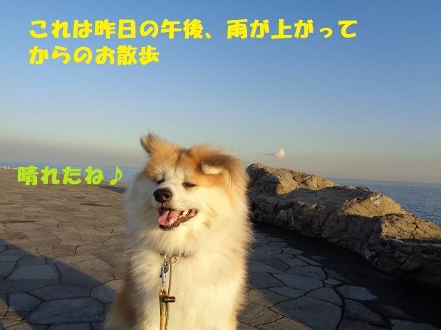 f0121712_14521635.jpg