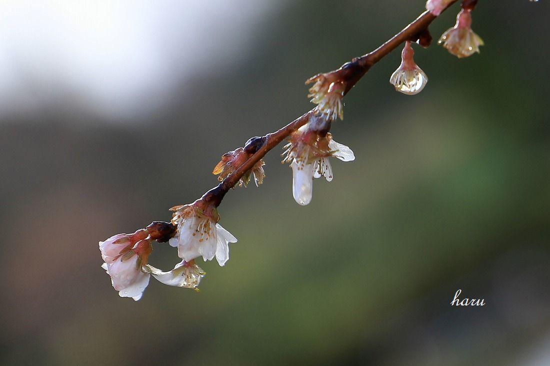 耐える花びら_f0297537_15410005.jpg