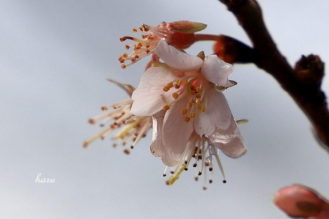 耐える花びら_f0297537_15411563.jpg