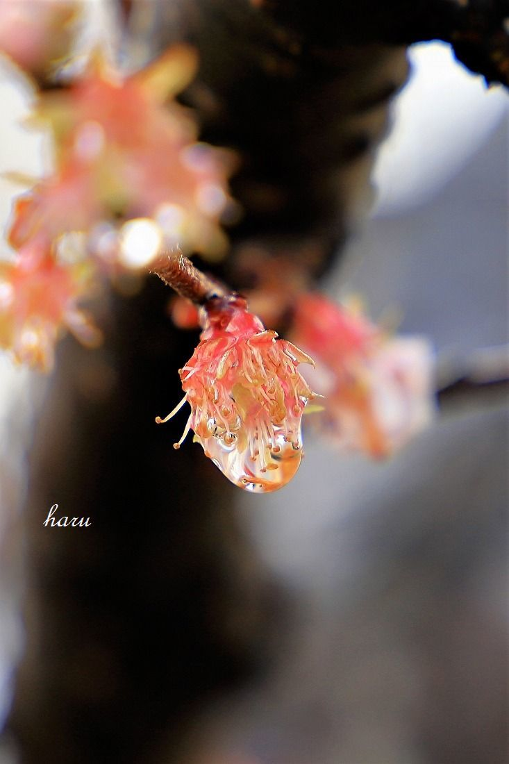 耐える花びら_f0297537_15411895.jpg