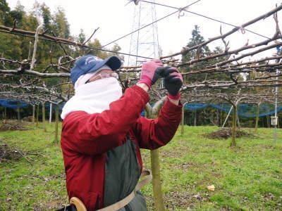 熊本梨 本藤果樹園 平成31年度も美味しい梨を育てるために、匠の冬の剪定作業スタートしました!_a0254656_16335181.jpg
