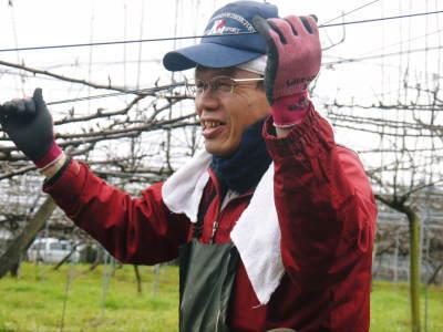 熊本梨 本藤果樹園 平成31年度も美味しい梨を育てるために、匠の冬の剪定作業スタートしました!_a0254656_17113242.jpg