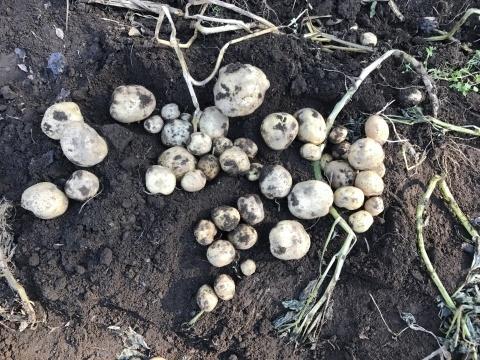 かつてない大豊作のレッドムーンなどを全収穫12・18_c0014967_19123230.jpg