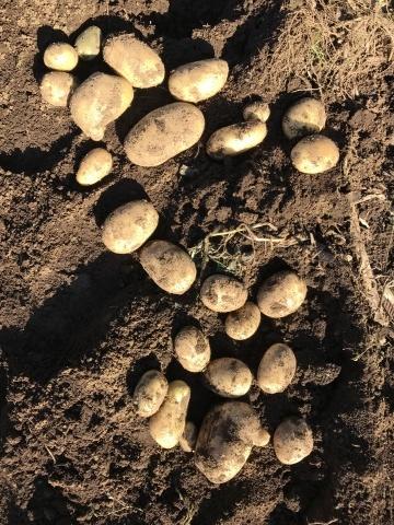 かつてない大豊作のレッドムーンなどを全収穫12・18_c0014967_19132440.jpg