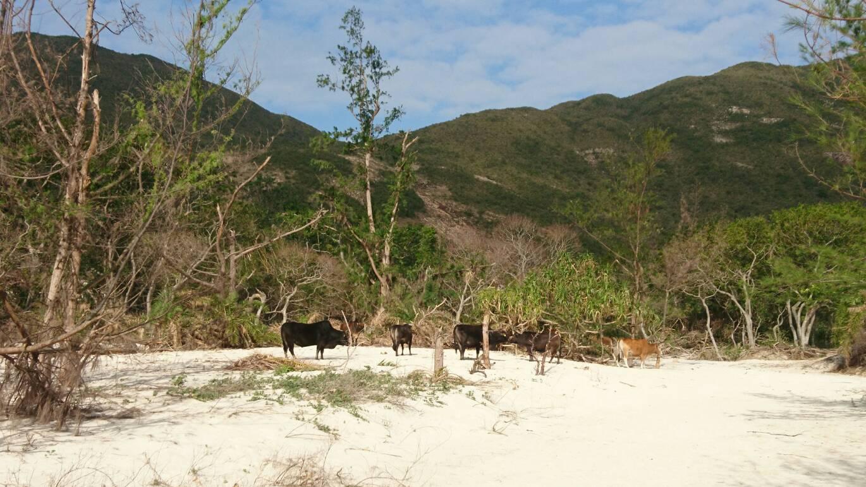 2018.12.14-17 4度目の香港 Trail & Beer 合宿 day2 ~マクリホーストレイル sec.2~_b0219778_21431586.jpg