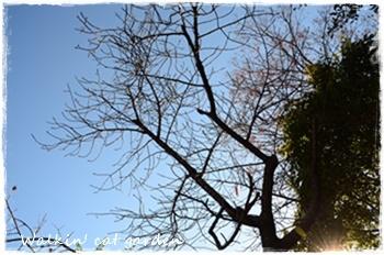 季節は変わって・・・_c0322789_14594288.jpg