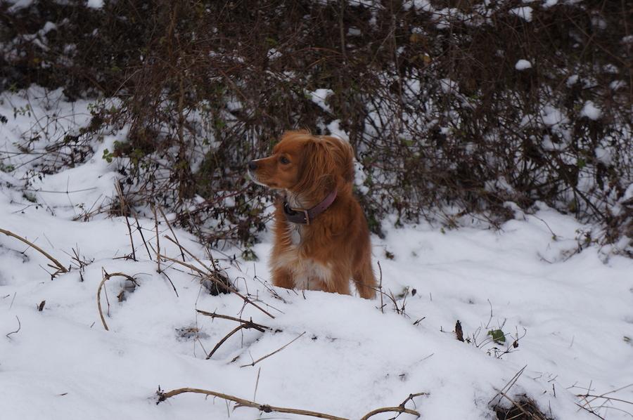 雪が降りました_f0106597_05430127.jpg