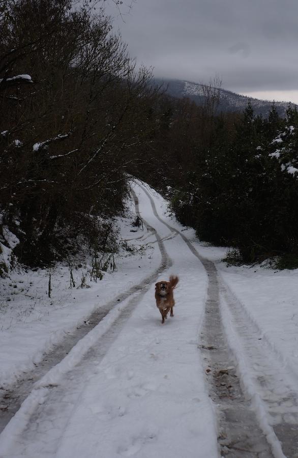 雪が降りました_f0106597_05440472.jpg