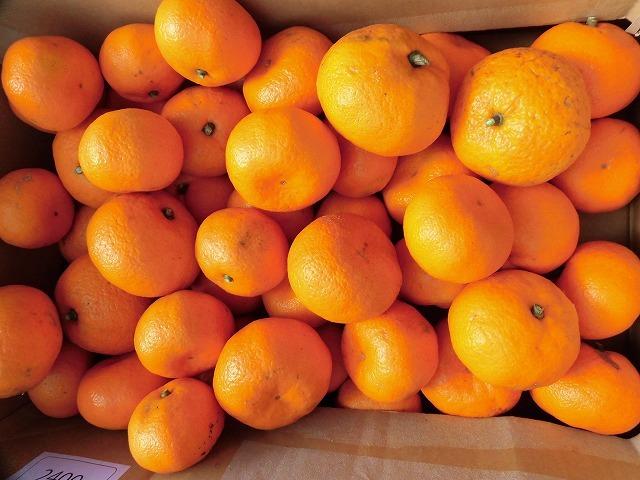 今夜あたりから柚子湯で身体のケアを! 我が家のユズとミカンを収穫_f0141310_07270392.jpg