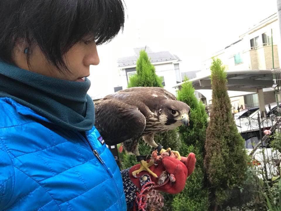 野生傷病鳥(ハヤブサ)のトレーニング_c0132048_15284381.jpg
