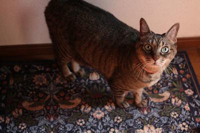 今年のブームはオンザ猫ハウス_d0034352_21593913.jpg