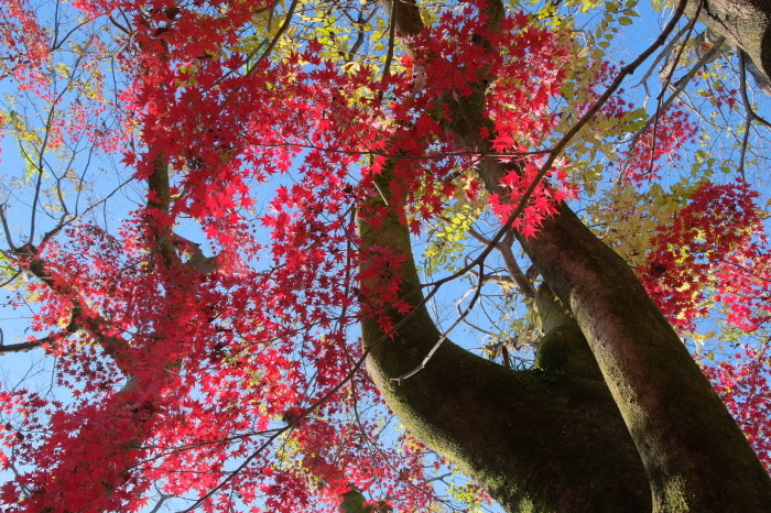 祇園白川~蹴上 紅葉2018_f0021869_00323418.jpg