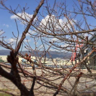 ☆春を迎える準備がはじまっていますよ_d0035397_18405571.jpeg