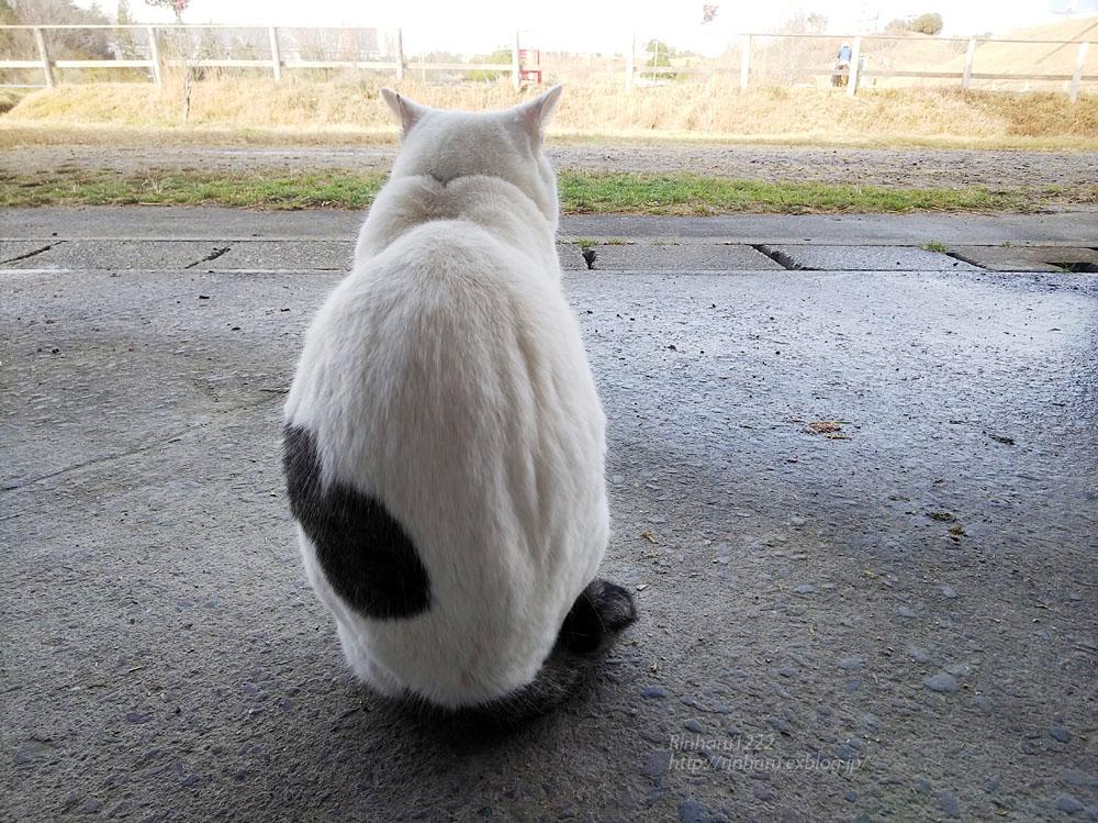 2018.12.7 ルネサンス棚倉乗馬クラブ☆猫のシロくん_f0250322_21245236.jpg