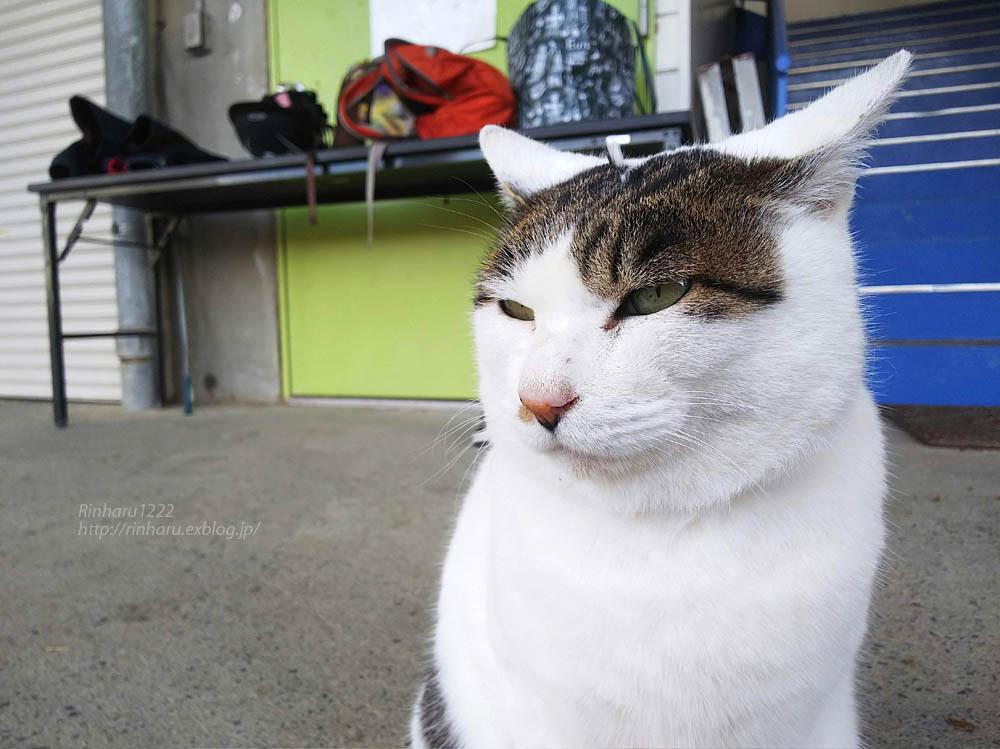 2018.12.7 ルネサンス棚倉乗馬クラブ☆猫のシロくん_f0250322_21245880.jpg
