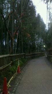 嵯峨野竹林の小径_f0030155_6545263.jpg