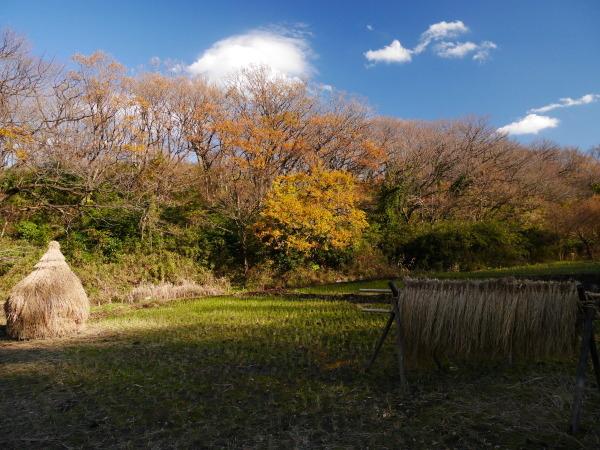 舞岡公園_a0351368_23061886.jpg
