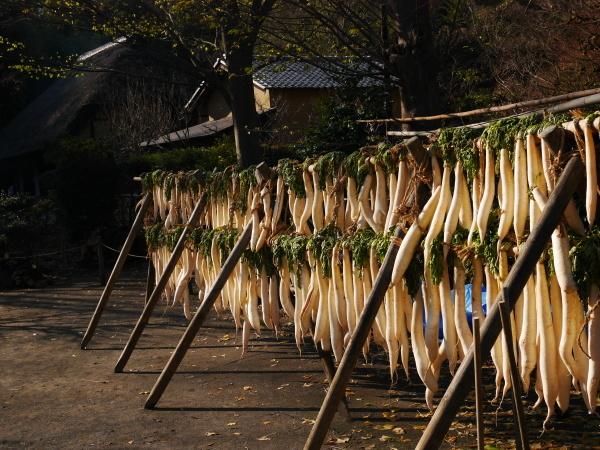 舞岡公園_a0351368_23081607.jpg