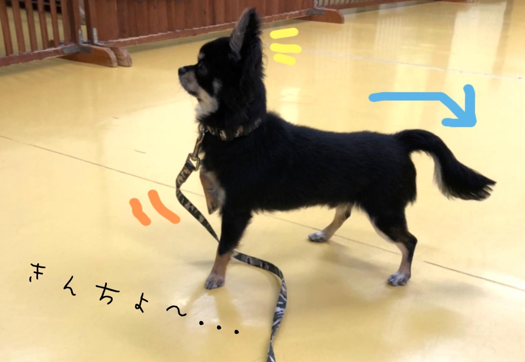トレーニングブログ_f0357682_20005667.jpeg
