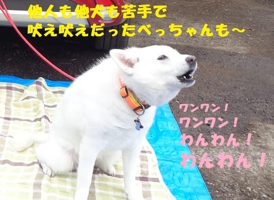 f0121712_06131816.jpg