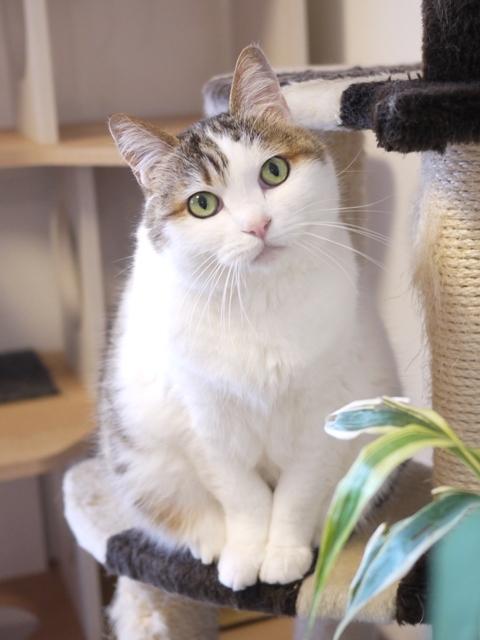 猫のお留守番 さくらちゃん編。_a0143140_22572409.jpg