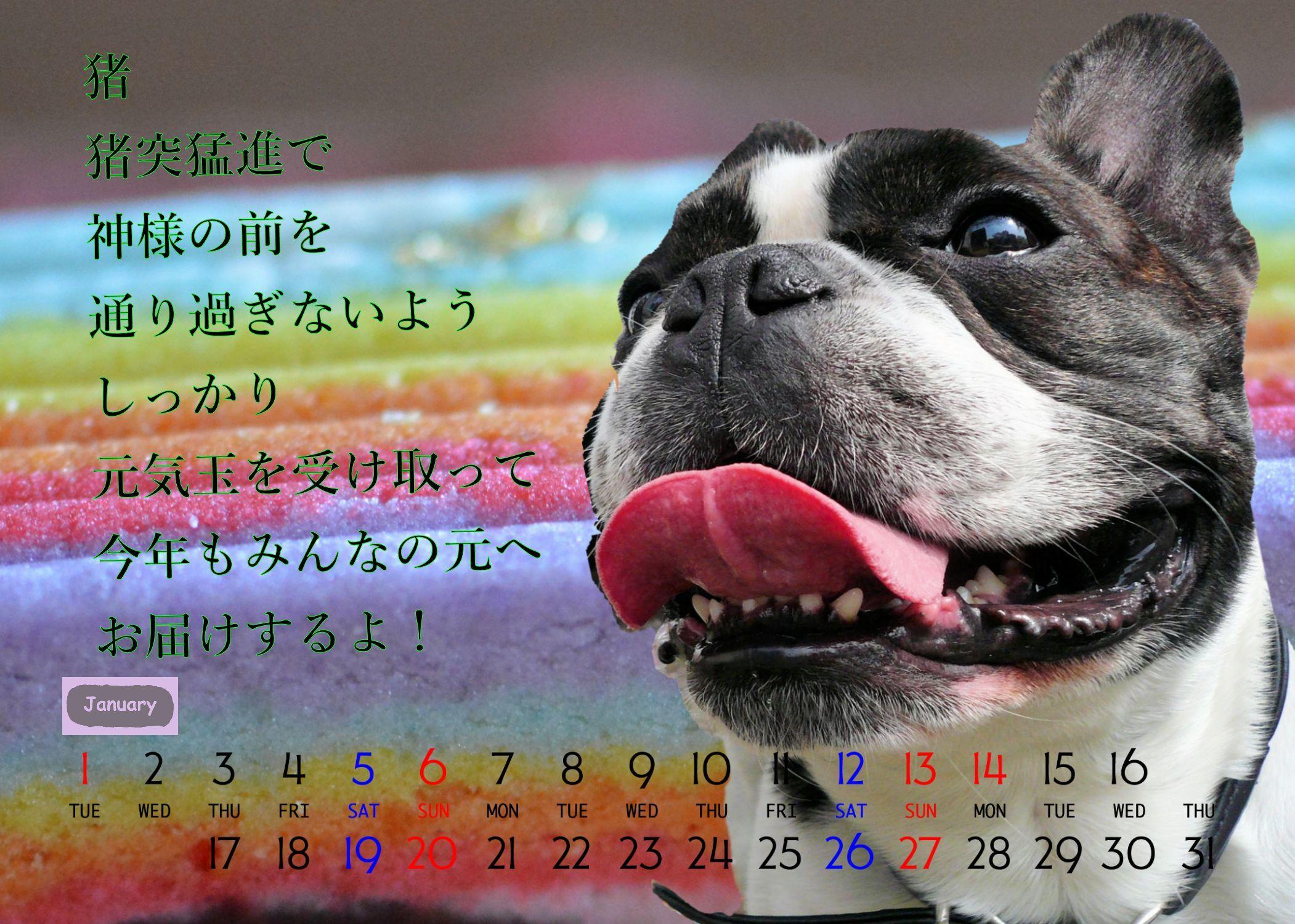 2019年天使の空ちゃん初のカレンダー_b0307951_18054527.jpg