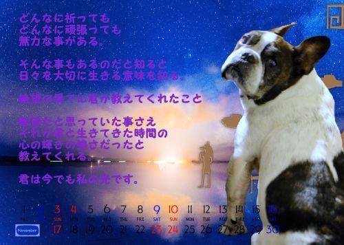 2019年天使の空ちゃん初のカレンダー_b0307951_18102893.jpg