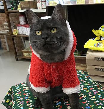 クリスマスコスプレ~!!_e0362456_22541002.jpg