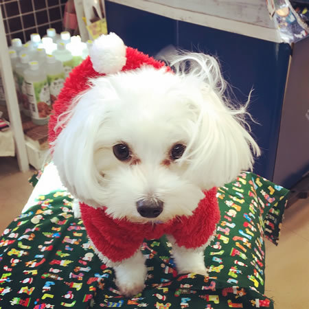 クリスマスコスプレ~!!_e0362456_22542133.jpg