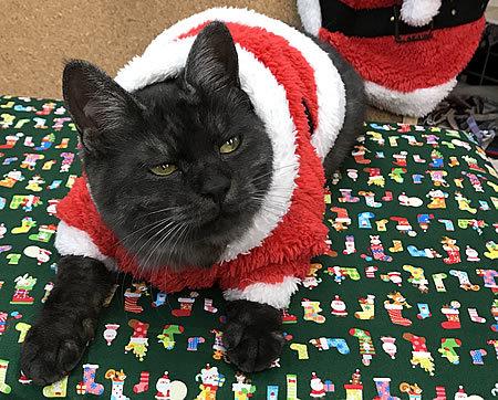 クリスマスコスプレ~!!_e0362456_22542982.jpg